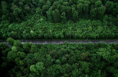 droga pośród drzew
